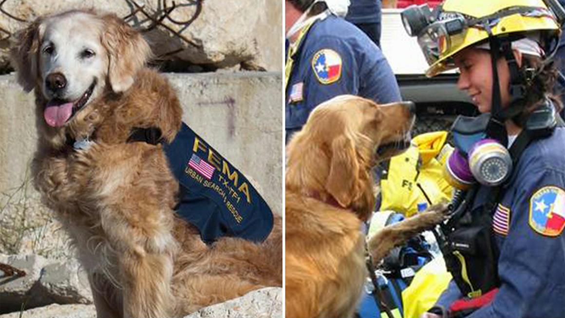 Meghalt a szeptember 11-i terrortámadások utolsó mentőkutya túlélője
