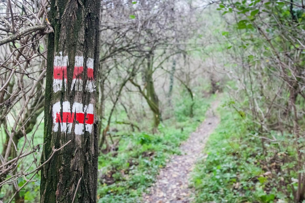 Friss hírek: Jövő hétfőtől délután 3-tól reggel 9-ig veszélyes bemenni az erdőbe.