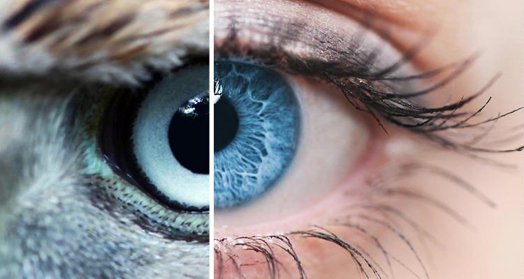 látásjavító technológia)