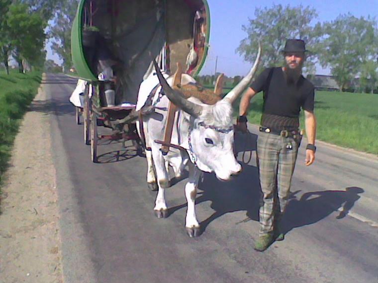 Mindig az út közepén bandukolt az ökreit vezetve, ezért is halhatott meg a 14 éve vándorló Gecse Balázs Gergő