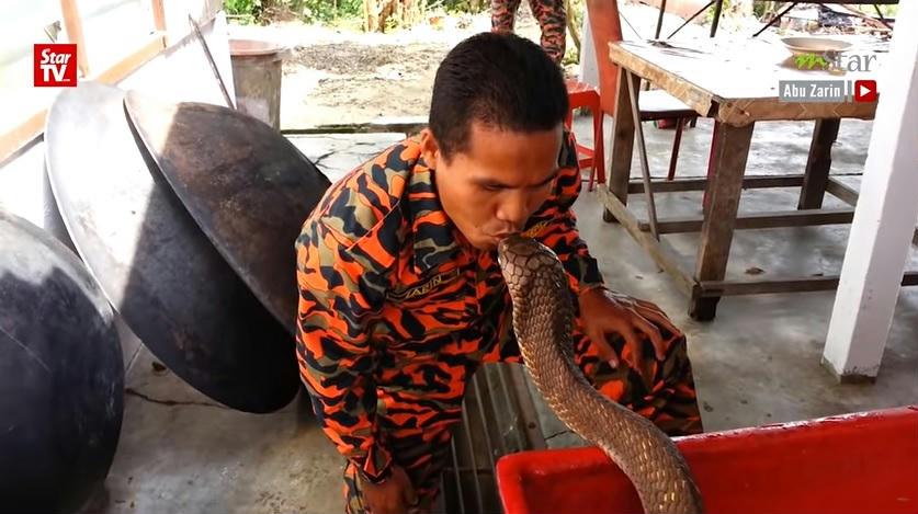 Fekete kígyó szex