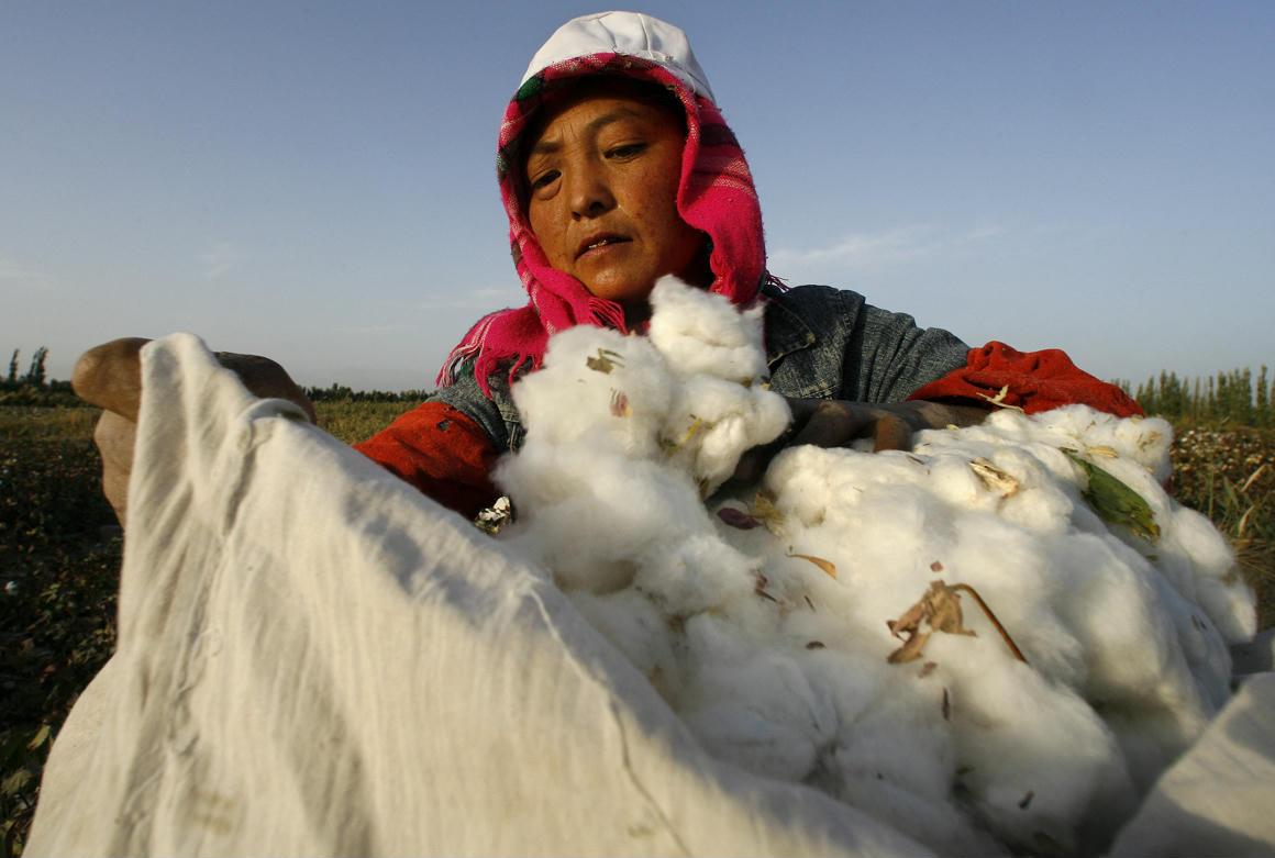 Ha Kínában gyártott pamutpólót hordasz, az nagy eséllyel ujgur kényszermunkával készült