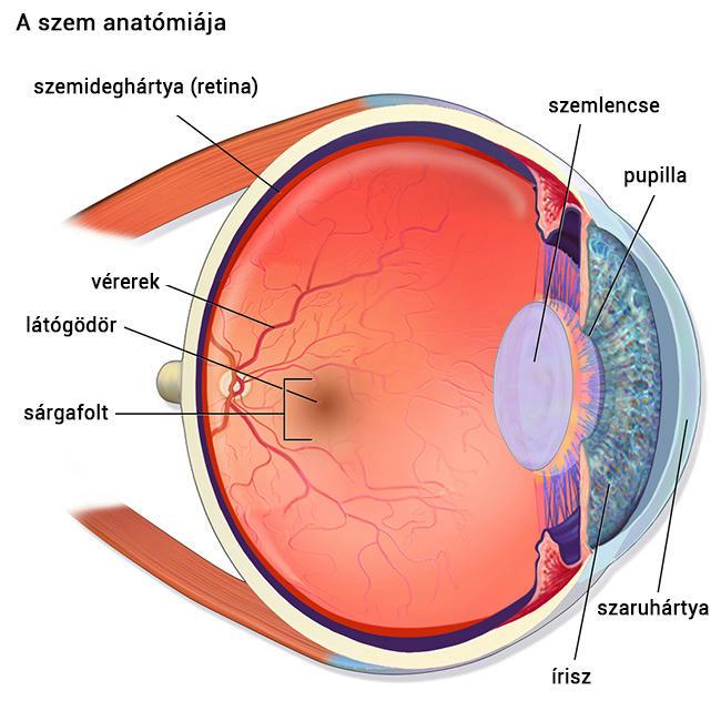 Hogyan lehet helyreállítani a látást a házban - A terápia alapelvei és főbb módszerei